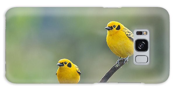 Golden Tanagers Galaxy Case