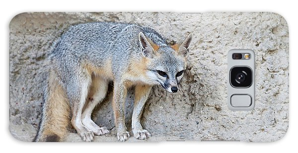 Sly Galaxy Case - Gray Fox (urocyon Cinereoargenteus by Larry Ditto