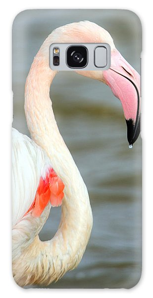 Greater Flamingo Phoenicopterus Roseus Galaxy Case by Panoramic Images