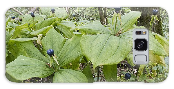Herb Paris Galaxy Case
