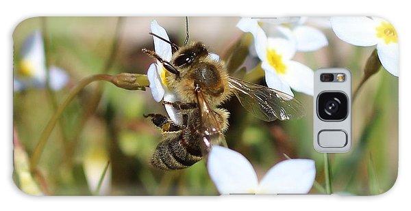 Honeybee On Bluet Galaxy Case by Lucinda VanVleck