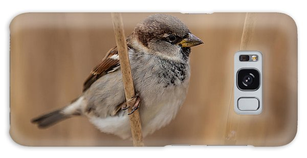 House Sparrow Passer Domesticus Galaxy Case