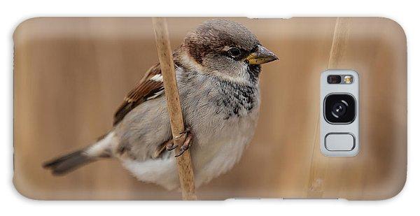 House Sparrow Passer Domesticus Galaxy Case by Gabor Pozsgai