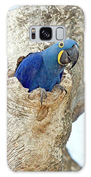 Macaw Galaxy Case - Hyacinth Macaw by Tony Camacho/science Photo Library