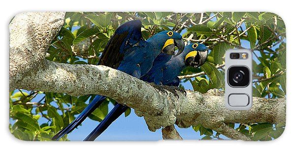 Hyacinth Macaws, Brazil Galaxy Case by Gregory G. Dimijian, M.D.