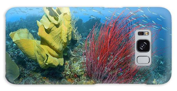 Ecosystem Galaxy Case - Indonesia, Raja Ampat by Jaynes Gallery