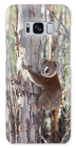 Koala Galaxy Case - Koala Bear by Ashley Cooper