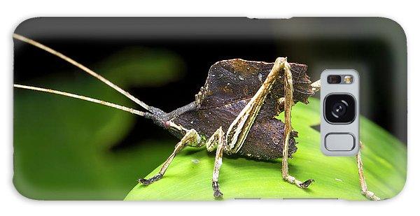 Leaf Mimic Bush-cricket Galaxy Case