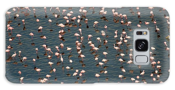 Lesser Flamingo, Lake Nakuru, Kenya Galaxy Case by Panoramic Images