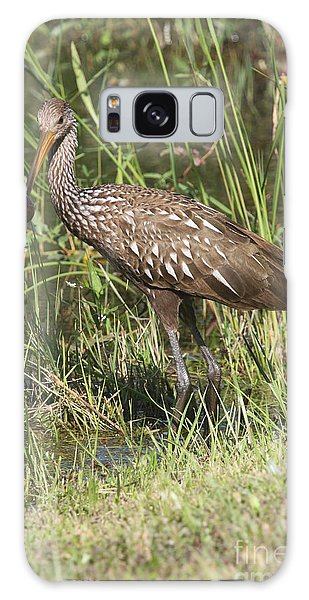 Limpkin In The Glades Galaxy Case by Christiane Schulze Art And Photography
