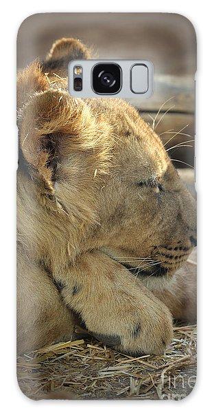 Lion Cub Dozing In The Sun Galaxy Case