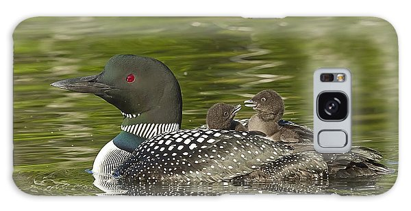 Loon Parent With Two Chicks Galaxy Case