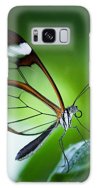 Macro Photograph Of A Glasswinged Butterfly Galaxy Case