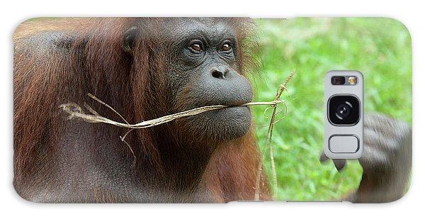 Malaysia, Borneo, Sabah, Kota Kinabalu Galaxy Case by Cindy Miller Hopkins