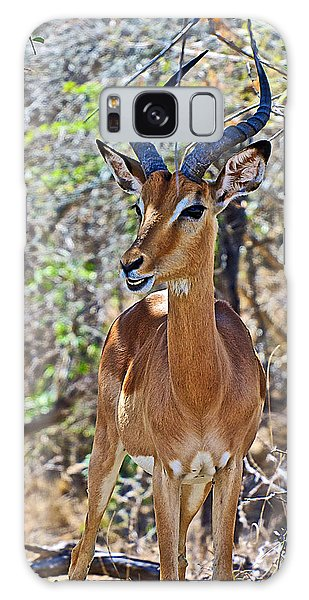 Male Impala In Kruger National Park-south Africa   Galaxy Case