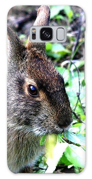 Marsh Rabbit Galaxy Case