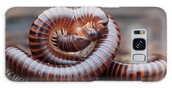 Behaviour Galaxy Case - Millipedes Mating by Melvyn Yeo