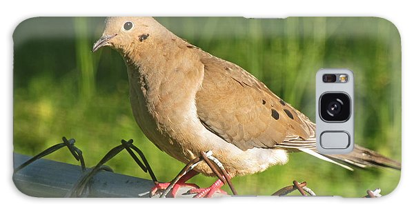 Morning Dove I Galaxy Case