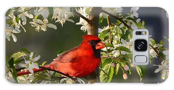 Red Cardinal In Flowers Galaxy Case
