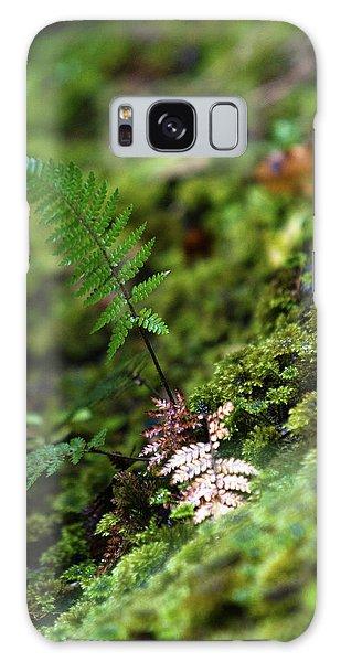Ecosystem Galaxy Case - New Zealand Stewart Island, Ulva Island by Micah Wright