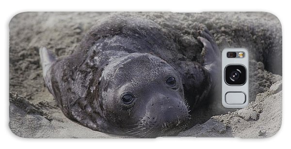 Newborn Northern Elephant Seal Pup  Galaxy Case