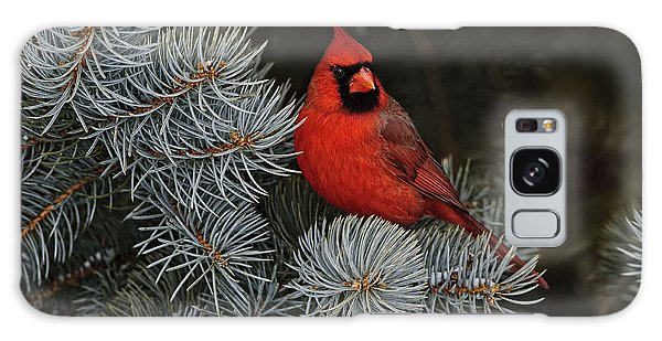 Northern Cardinal In Spruce Tree. Galaxy Case