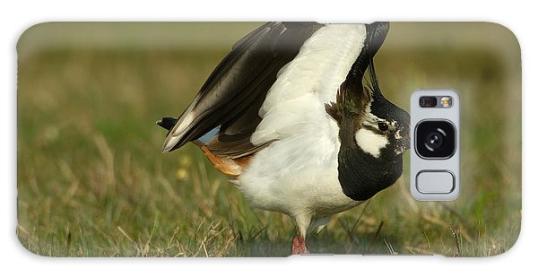 Lapwing Galaxy Case - Northern Lapwing by Helmut Pieper