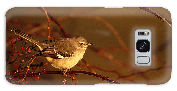 Northern Mockingbird Mimus Polyglottos Galaxy Case