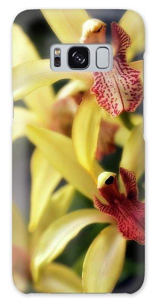 Hybrid Galaxy Case - Orchid (cymbidium Hybrid) by Maria Mosolova/science Photo Library