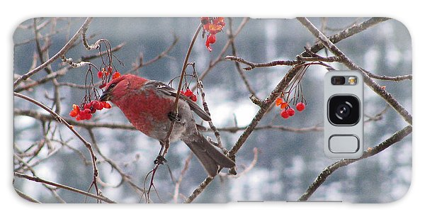 Pine Grosbeak And Mountain Ash Galaxy Case by Leone Lund