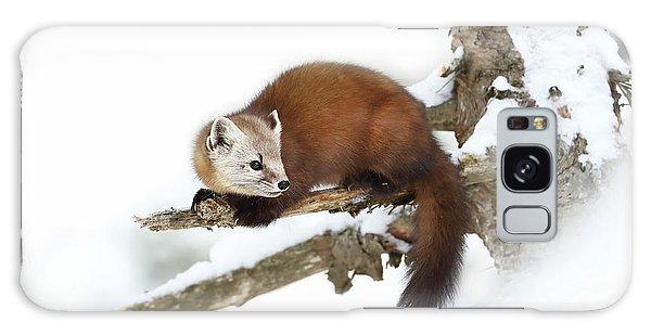 Furry Galaxy S8 Case - Pine Marten - Algonquin Park by Jim Cumming