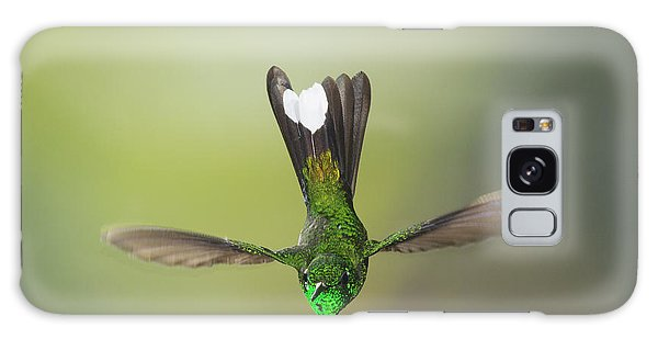 Purple-bibbed White-tip Hummingbird Galaxy Case
