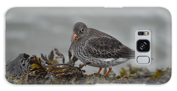 Purple Sandpiper Galaxy Case