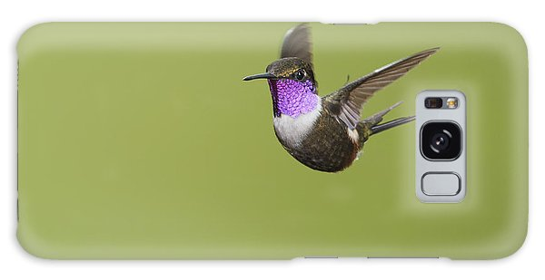 Purple-throated Woodstar Hummingbird Galaxy Case