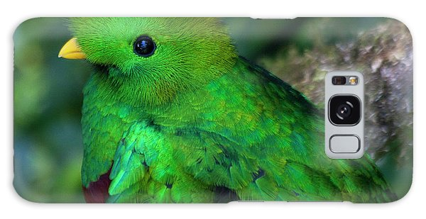 Galaxy Case featuring the photograph Quetzal by Heiko Koehrer-Wagner
