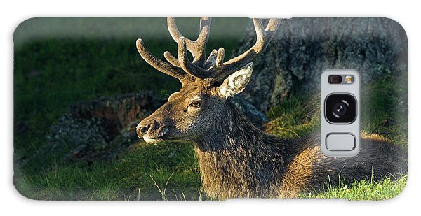 Cairngorms National Park Galaxy Case - Red Deer Stag In Summer by Duncan Shaw/science Photo Library