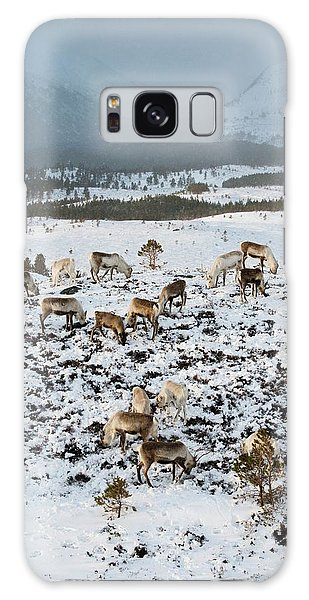 Cairngorms National Park Galaxy Case - Reindeer In Snow by Duncan Shaw