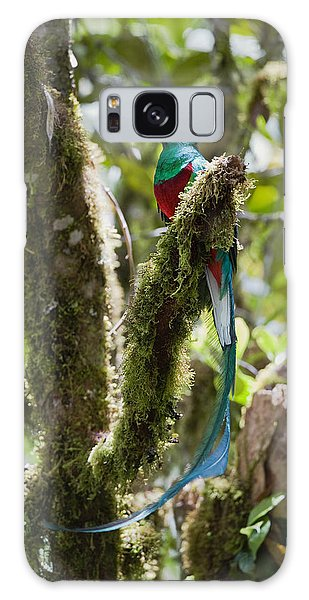 Resplendent Quetzal Male Costa Rica Galaxy Case