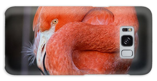 Resting Flamingo Galaxy Case