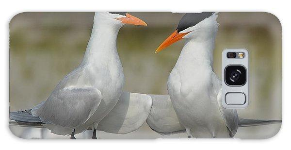 Royal Terns Galaxy Case