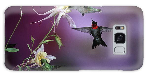 Aquilegia Galaxy Case - Ruby-throated Hummingbirds (archilochus by Richard and Susan Day
