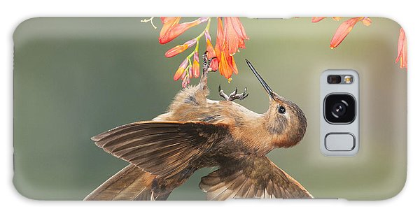 Shining Sunbeam Hummingbird Galaxy Case