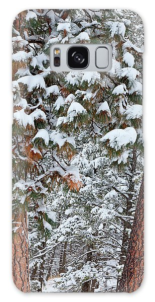 Pine Branch Galaxy Case - Snow Fills The Boughs Of Ponderosa Pine by Chuck Haney
