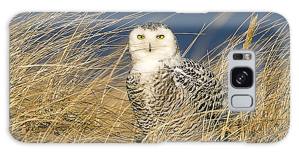Snowy Owl In The Dunes Galaxy Case