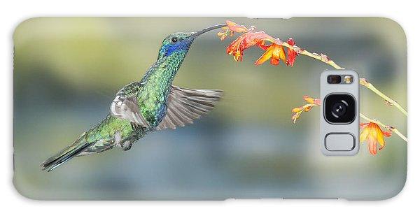 Sparkling Violet-ear Hummingbird Galaxy Case