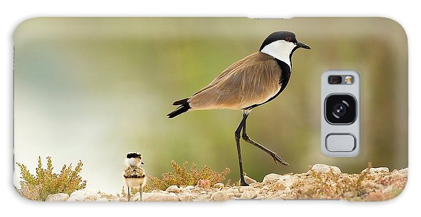 Lapwing Galaxy Case - Spur-winged Lapwing Vanellus Spinosus by Photostock-israel