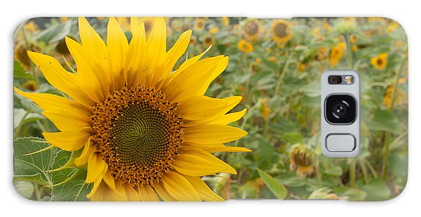 Sun Flower Fields Galaxy Case by Miguel Winterpacht