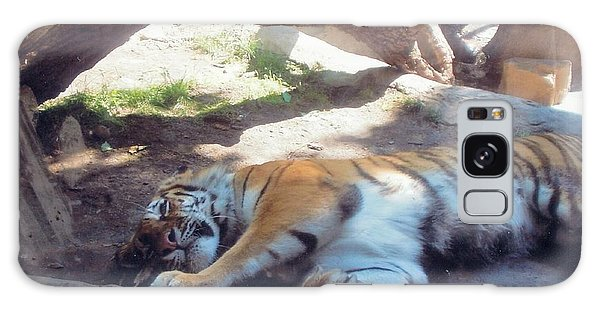 Tiger At Rest Galaxy Case