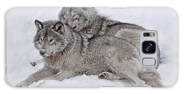 Timber Wolf Pair Galaxy Case