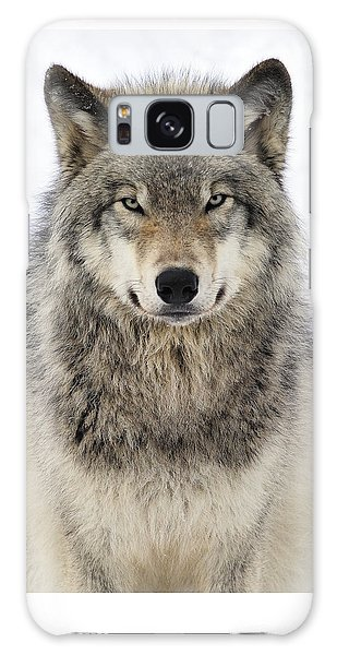 Animal Galaxy Case - Timber Wolf Portrait by Tony Beck